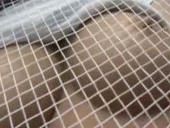 Japanese Tennis Porn clips